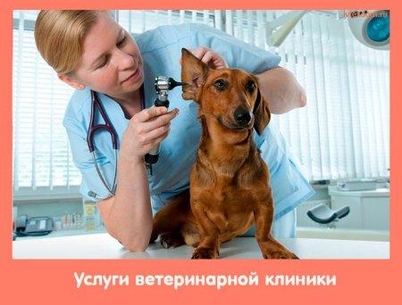 Услуги ветеринарной клиники